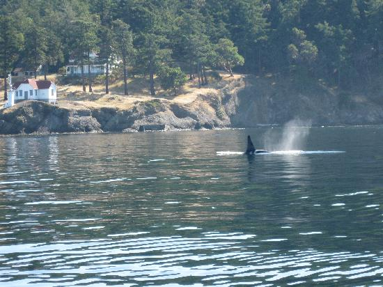 Western Prince Whale & Wildlife Tours: Whale at Turn Point Lighthouse