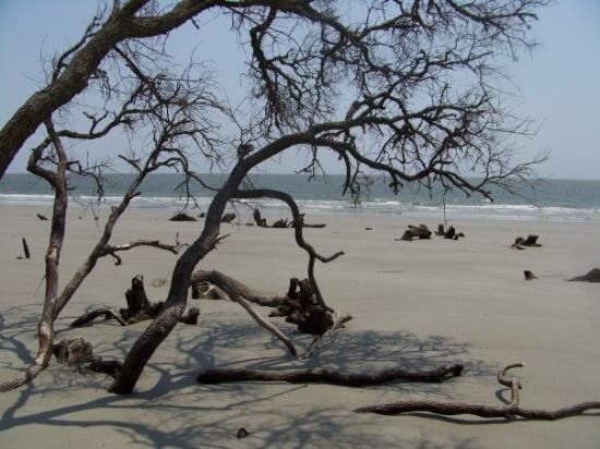 Hunting Island State Park Resmi