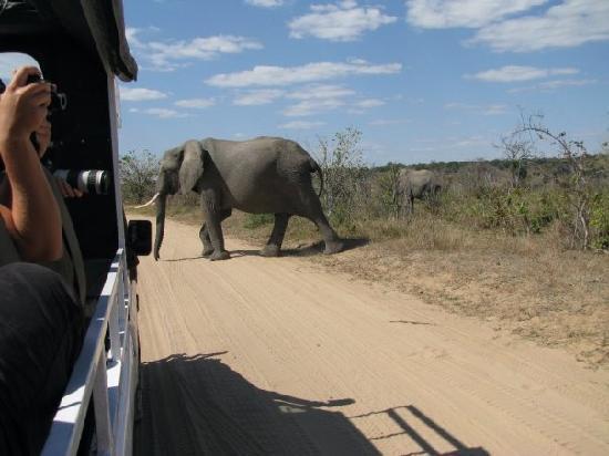 Botswana: Elephant crossing the road