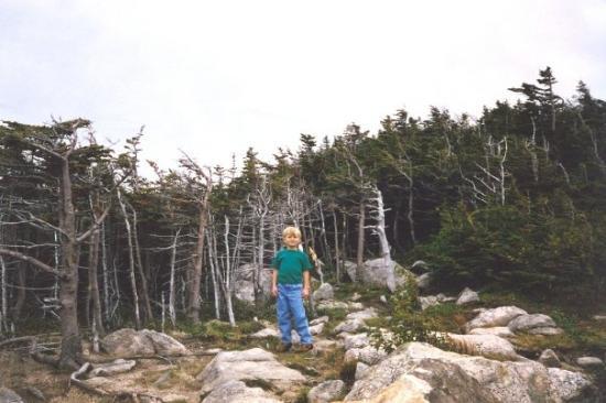 Mount Washington Valley: Zac.. Mount Washington, New Hampshire, September 1998