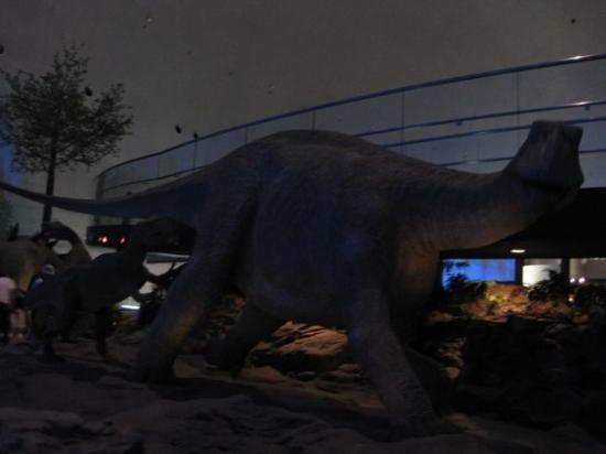 Fukui Dinosaur Museum Photo