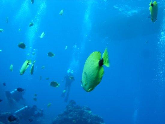 Dive & Sea Maui