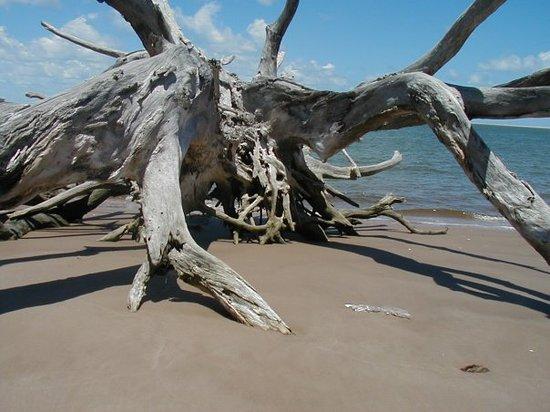 Amelia Island-billede