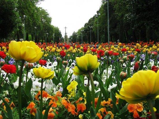 طهران صورة فوتوغرافية