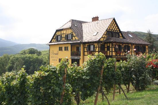 Hotel Arnold : L'hôtel entouré de vignes