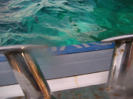 Gorgonia Diving: caption 1