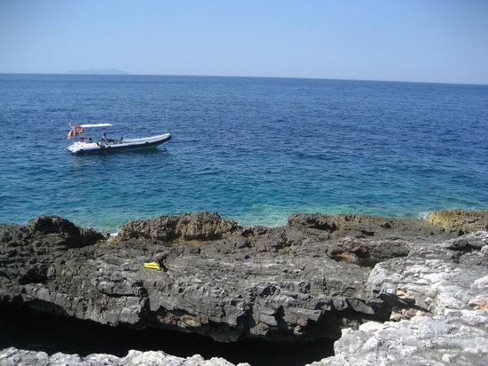 Gorgonia Diving