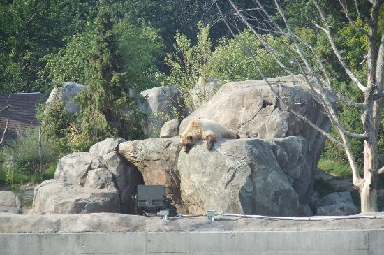 Minnesota Zoo: Grizzly bear