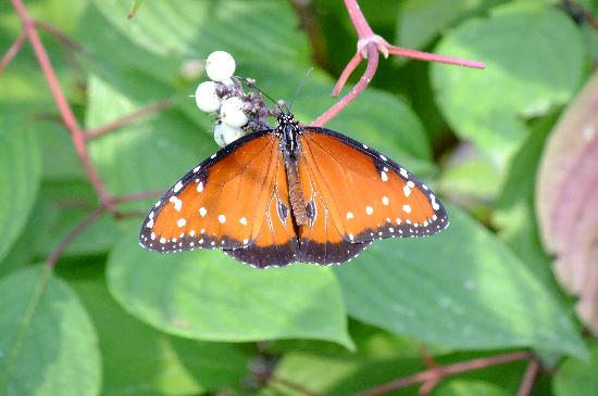 Apple Valley, MN: Butterfly garden