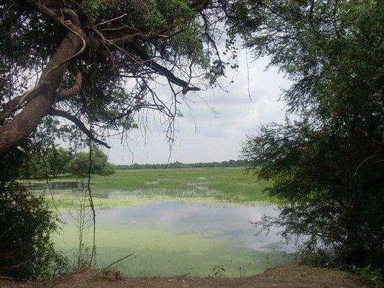 Balsamand Lake and Garden Photo