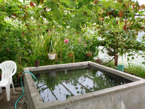 Manley Roadhouse: Hot springs tub in greenhouse
