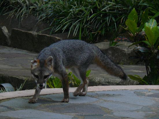Rainbow Valley Lodge: Fox visited every day last day brought three pups