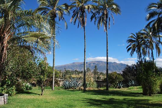 Hostal Las Palmeras : Mountains throught the palm trees