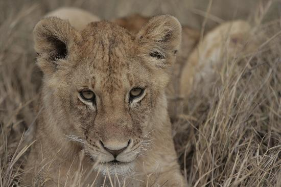Serengeti Tented Camp - Ikoma Bush Camp: Unbelievable what you get to see...