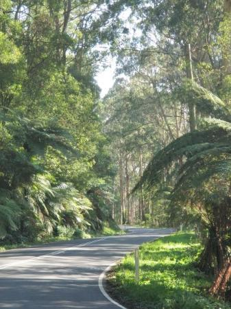 Dandenong Ranges: I love the Dandenongs! (actually Melbourne in general)