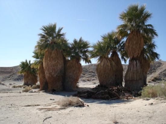 Anza, Kalifornien: 17 palms oasis