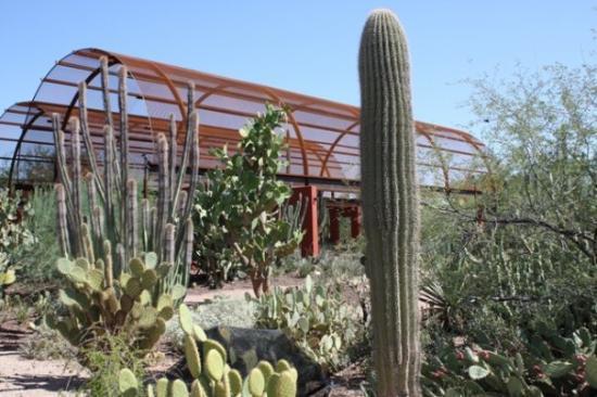 Amazing Varieties Of Cactus Picture Of Desert Botanical Garden Phoenix Tripadvisor