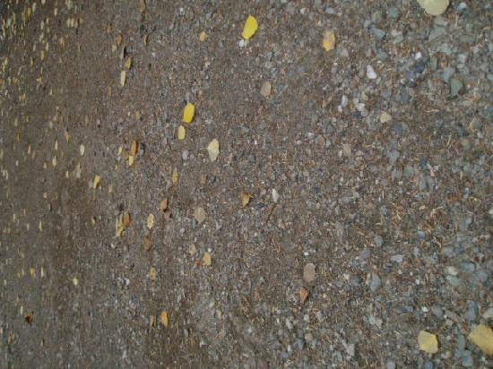 Wonder Lake Campground: closeup of soil of tent pad.  compacted gravel