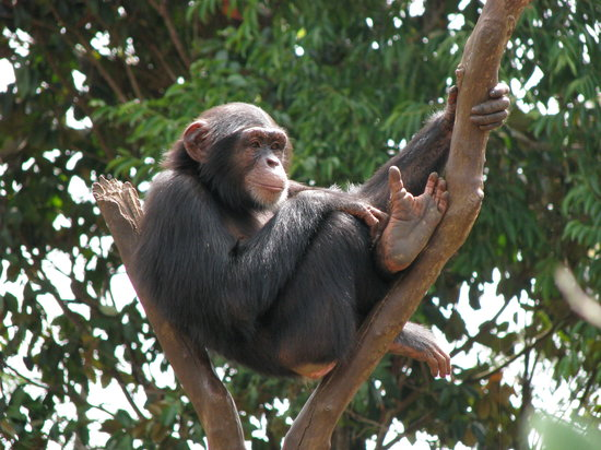 Tacugama Chimpanzee Sanctuary : Jimmy