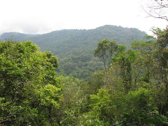 Tacugama Chimpanzee Sanctuary : View from the treehouse