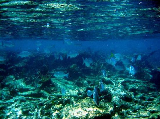 Bodden Town, Grand Cayman: There is a lot of live on the reef just off shore