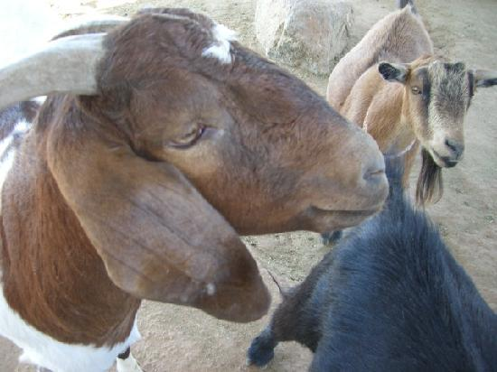 Superstition Farm : Just one of the friendly animals...