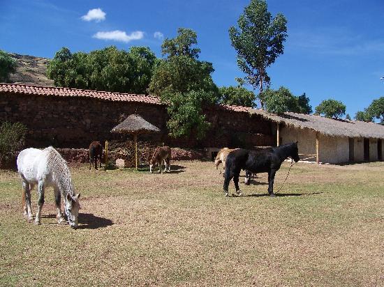 Ninos Hacienda