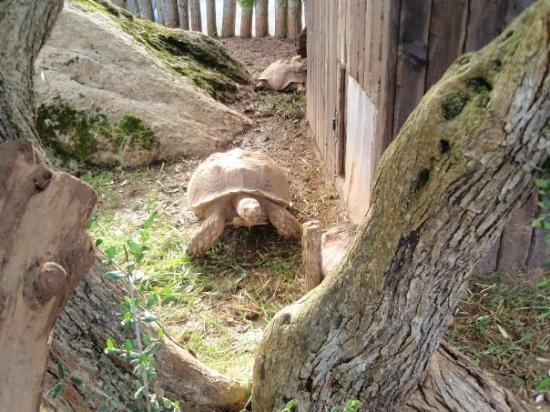 cabarceno - Picture of Parque de la Naturaleza de Cabarceno, Obregon - TripAd...