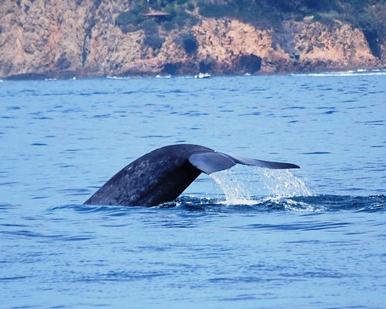 Pantai Newport, CA: Whale Watching Trip Off Newport Beach