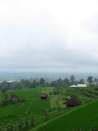 Seminyak, Indonesien: Rice Paddy's, Jatiluwih Village