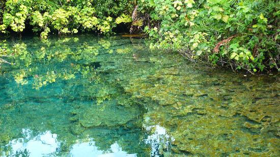 Tortuga Bay Hotel Puntacana Resort & Club: un des lagons sur le parcours écolo