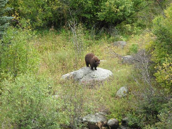 Rocky Mountain National Park, CO: Mama Black Bear