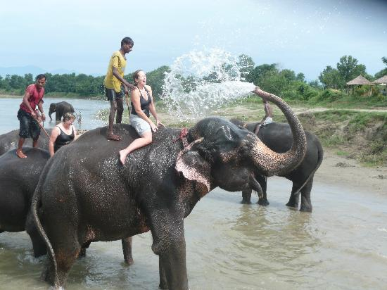 Unique Wild Resort: Don't miss bathing with the elephants!