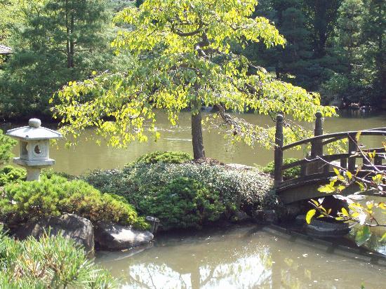 beautiful tree picture of anderson japanese gardens rockford tripadvisor. Black Bedroom Furniture Sets. Home Design Ideas