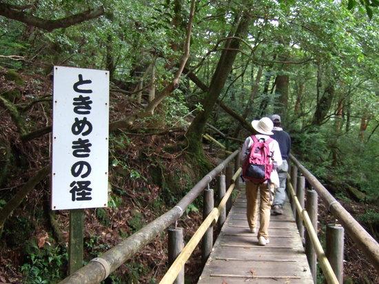 Yakushima-cho, Ιαπωνία: 歩きやすい道です