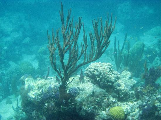 """Providenciales: White House """"Bight"""" reef - August 2009"""