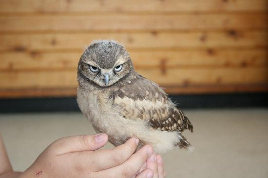 Burrowing Owl Interpretive Centre: Holding on to George