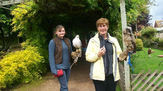 Newent, UK: Learning how to hold the birds properly
