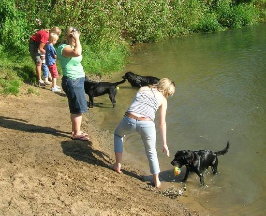Cowdray Castle: Sandy Bay - Dogs having a swim
