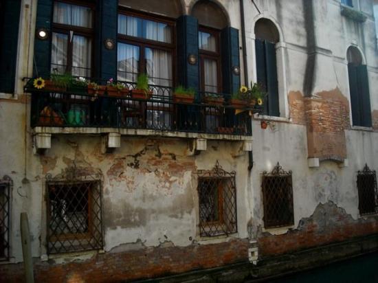 A Venice Fish Photo