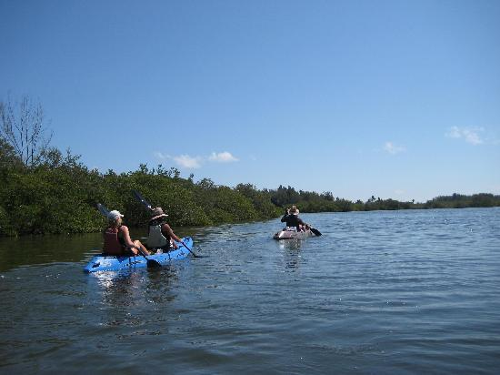 Fin Expeditions: Beautiful day for kayaking.