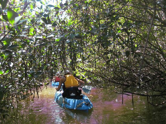 Fin Expeditions: Padding through the mangroves.
