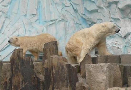 Vilvordevej 110 Givskud Zoo adresse