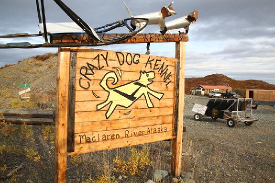 Denali Highway Tours: Revenues go to help rescue dogs.