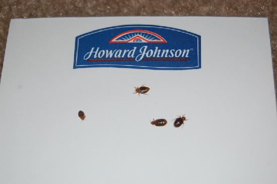 Howard Johnson Inn Concord/Kannapolis : 4 of the bugs