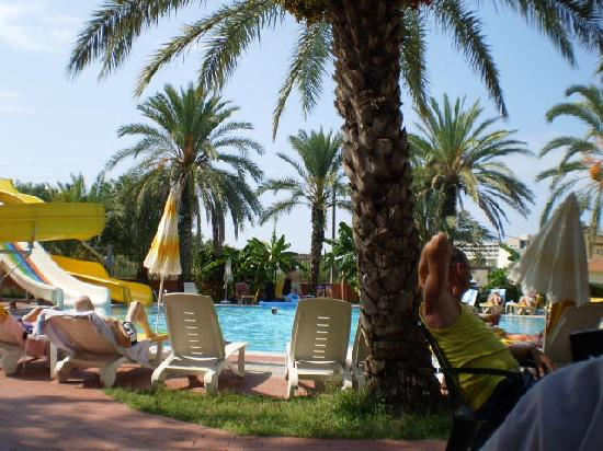 Palm d'Or: Pool