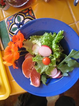 La Alianza: Organic Mixed Greens with Grapefruit & Nasturtiums from Deborah's Garden