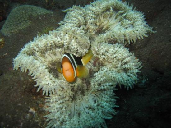 Tulamben, อินโดนีเซีย: i found nemo
