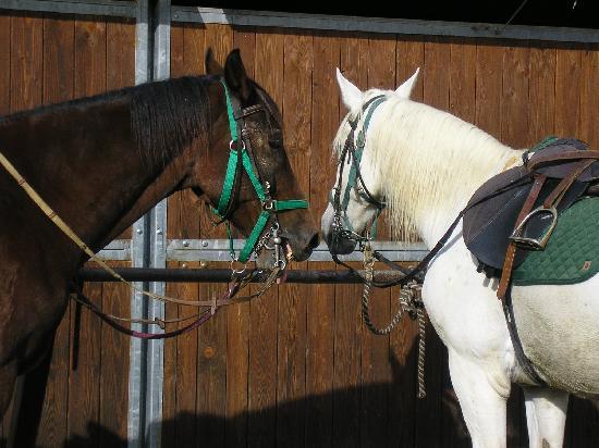 Agriturismo Il Vecchio Maneggio: the horses