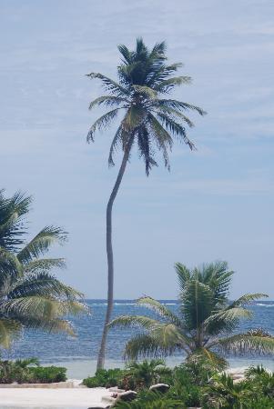 Coco Beach Resort: Just Amazing!!!